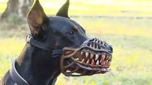 CA(SA) – BIG DOGS RUN IN TALL GRASS